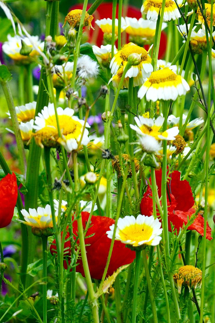 flower-meadow-5270651_1920 copy