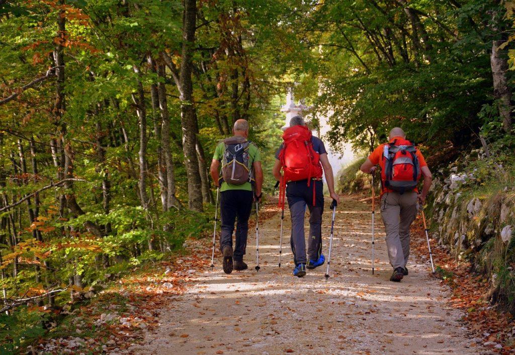 excursion, forest, autumn