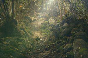forest, path, rocks
